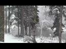 Видео падающего снега и зимнего леса