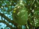 BBC Home Making Weaver Bird