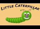 Little Caterpillar | sign language fingerplay for children