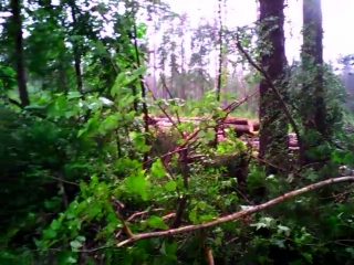Лес живой уничтожают.