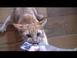 Смішні коти