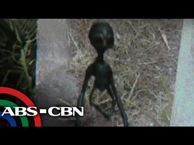 Real or fake Alien allegedly photographed in Laguna