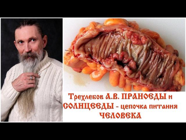Трехлебов А.В. ПРАНОЕДЫ и СОЛНЦЕЕДЫ - цепочка питания ЧЕЛОВЕКА