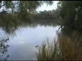 Очень страшное видео рыба мутант поедает утку