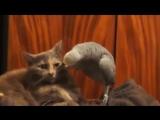 Говорящий попугай