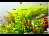 Green&ampGrey Aquarium - Day 240 - Last Day