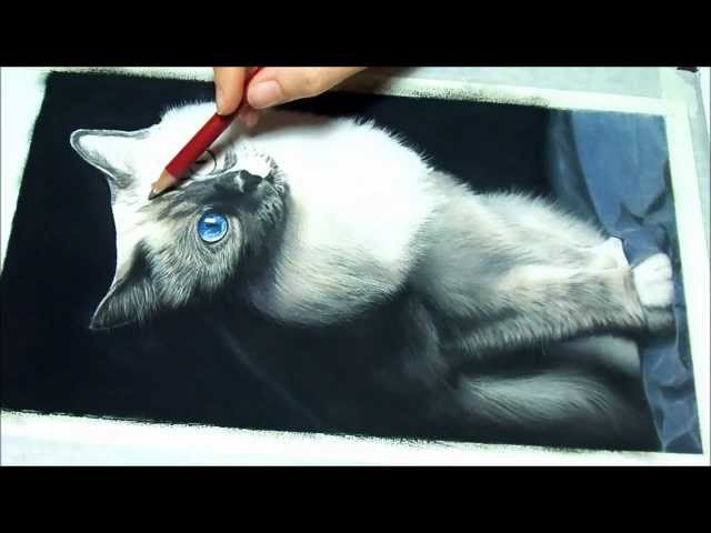 Speed painting of a Birman Cat portrait in pastels - Ritratto Sacro di Birmania