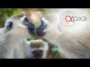 Светлана Бурлак «Системы коммуникации в животном мире пути развития»