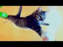 けしからん猫の垂直跳びには敵わない。 NOTHING CAN RIVAL THE JUMPING CAT!