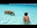 ЧПХ представляет: Даже свиньи на море! ... А я нет ...