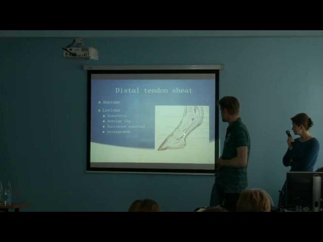 Практическое применение ультразвука в исследовании сухожилий, суставов, брюшной полости и сердца лошадей