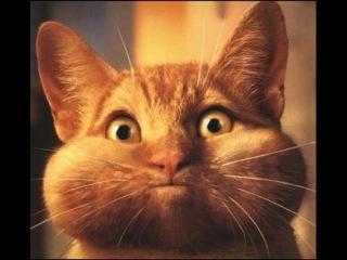 Смешные кошки 9 ● Приколы с животными лето 2014 ● Funny cats vine compilation ● Part 9