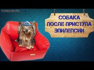 Собака после приступа эпилепсии
