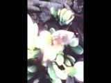 Пчёлы в Крыму - объявили Весну!