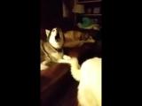 Хор хаски (Only Video)
