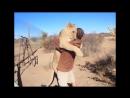 Невероятная дружба людей и диких животных (часть 1)