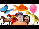 Colors Song | Learn 11 Colors with Real Objects | Learn English Kids