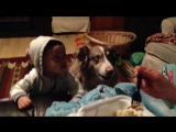 Собака «говорит» слово «мама» вместо ребенка
