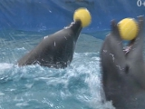 Дельфинарий в Кемерово