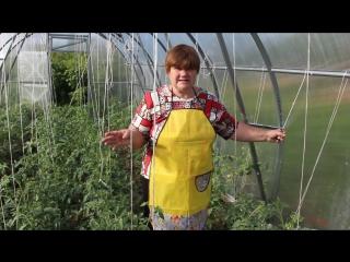 Фитофтора на помидорах. Как бороться с фитофторой. (Юлия Миняева (Маркина))...
