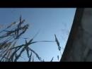 sosat-chlen-nezhno-smotret-video
