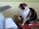 Кот убийца принтера