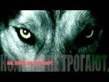 Волки - Филипп Вейс