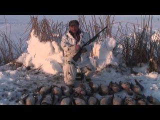 охота на гуся в январе