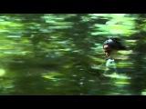 ButRic - Balam (Butch &amp Ricardo Villalobos) LoFi-Sound