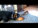 Sweet Funny Cute CATS BIG COMPILATION! August 2015