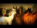 клип про лошадей - Поиск