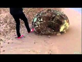 Цунами вынесло на берег Японии невиданный объект