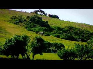 2011 Эдвардианская ферма 10 Июнь