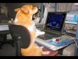 Смешные Собаки и кошки действуя как человека - Забавные Животные
