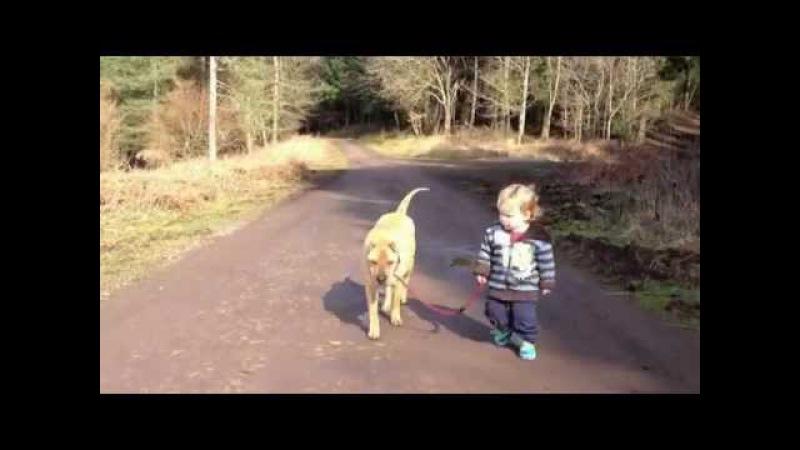 Мальчик, собака и лужа