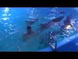 Дельфинарий Немо в Киеве: плавание с дельфином!