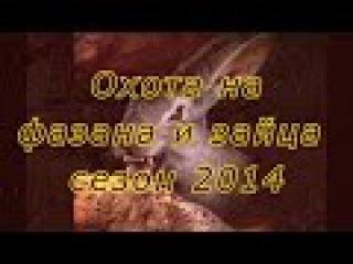 Охота на фазана и зайца с легавыми (дратхаарами) на Юге России. Сезон 2014г.