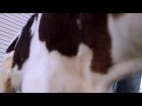 Сальвадор на ферме спасённых животных в Чили со своими спасителями