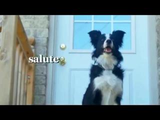 Nana the Border Collie Performs Amazing Dog Tricks , Бордер-Колли выполняет удивительные собачьи трюки ..