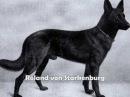 DEUTSCHER SHAFERHUND - 110 YEARS OF EVOLUTION-BY EDUARDO DURAN HAEDO -