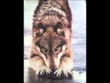 Блатной Удар - Одинокий волк (текст)