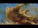Планета Мутантов Австралия Невероятные Животные Нашей Планеты! Animal Planet