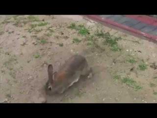 Зайчиха что-то прячет в земле. Я был в шоке, когда она разрыла тайник!