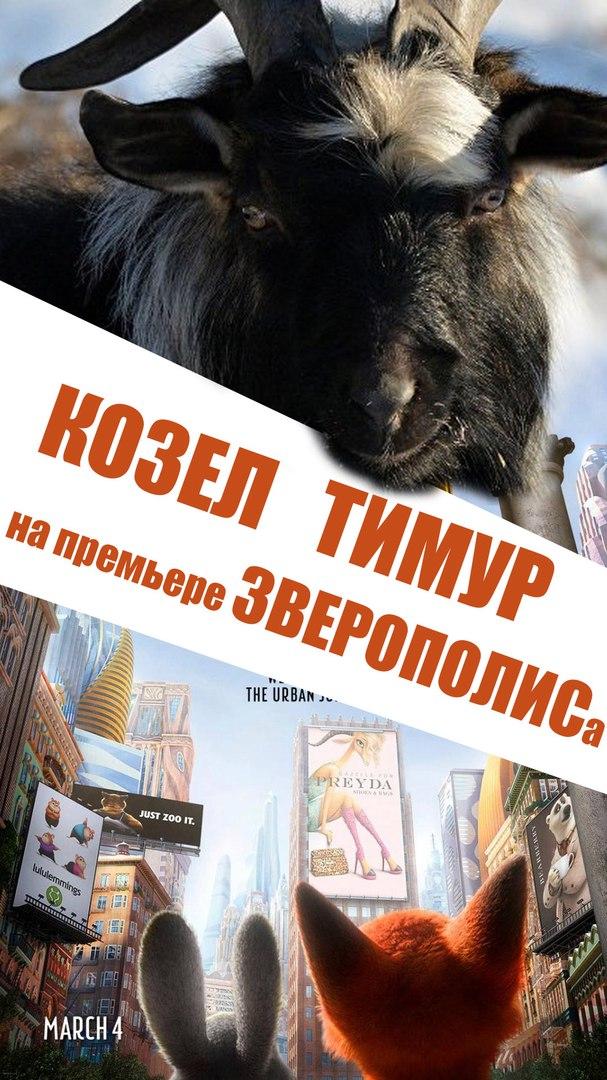 "Афиша Владивосток Козел Тимур посетит фильм ""ЗВЕРОПОЛИС""!"