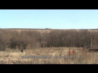 На охоте на фазана в Семидесятном.