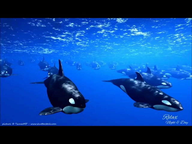 Delta Waves: 9 HOURS Whales Relaxing Music to Help you Sleep, Deep Sleep, Inner Peace ☯ 2