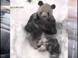 Панда очень рада снегу в одном из парков США