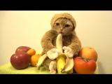 Новогодний кот в костюме обезьяны ест бананы