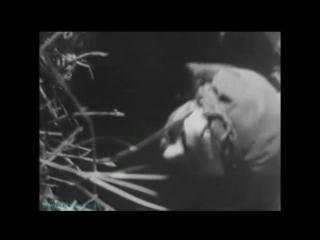 «Хроники Третьего рейха. Зелёные дьяволы (1933-1941)» (Документальный)