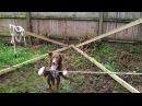 Что делает пес, цирк отдыхает - What makes a dog, a circus resting - Video Dailymotion